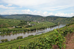 View over vineyards at Moselle river Rhineland-Palatinate in Ge Stock Image