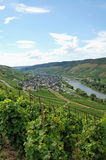 View over vineyards at Moselle river Rhineland-Palatinate in Ge Royalty Free Stock Images