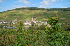 View over vineyards at Moselle river Rhineland-Palatinate in Ge Stock Photography