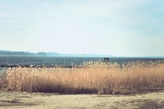 View over water and the natural beach against blue cold sky royalty free stock photography