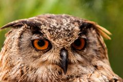 View owls Royalty Free Stock Images