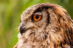 View owls Stock Images