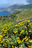 View on Pacific cost. California USA. View on Pacific cost in Big Sur area. California USA Stock Photography