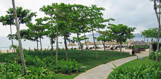 View of palapas through tropical garden Stock Photo