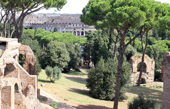 View from the Palatine Hill at the Colosseum, Rome, Italy Stock Images