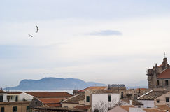 View of Palermo with roofs and seagulls stock photos