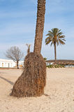 View of palm bottom on the beach Stock Images