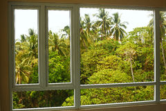 View on palm thai forest from the window Royalty Free Stock Photos