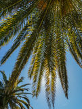 A view  of palm tree against  bright  blue sky. Stock Images