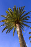 View on palm tree from below Stock Image