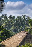 View of palm tree jungle and house Royalty Free Stock Image