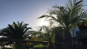 View of palm trees against sky stock video footage