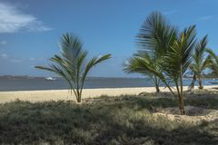 View of palm trees on beach, and boats on water, on the island of Mussulo, Luanda, Angola. View of palm trees on beach, on the island of Mussulo, Luanda, Angola royalty free stock photos
