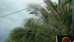 A view of palm trees and blue sky. From a passing car stock footage