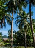 Palm trees with small pond Royalty Free Stock Photos