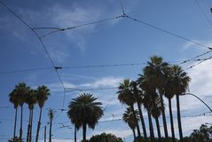 View of Palm trees and electric cables stock photos