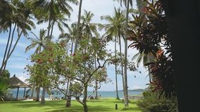 View of palm trees on lawn in front of swimming pool and ocean, Bali. View of palm trees and a red flower tree on lawn in front of swimming pool and ocean, Bali stock footage