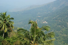 View of palm trees, mountains and valleys, Kerala Stock Image