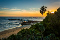 View of palm trees and the Pacific Ocean from Heisler Park  Royalty Free Stock Photos