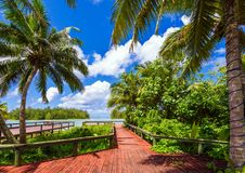 View of palm trees and seascape, Cook Islands, South Pacific.  stock image