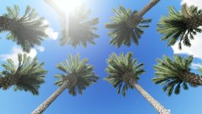 View of palm trees, sky and aircraft flying stock video footage