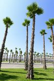 View of the palm trees Royalty Free Stock Photography