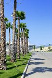 View of the palm trees Royalty Free Stock Photos