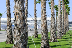 View of the palm trees in Sochi Royalty Free Stock Photography