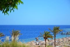 View of palms, beach, and the red sea in Egypt. Summer vacation at sea Stock Images