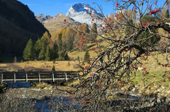 View of the Palpuogna lake with golden larch and the peak of Piz Ela, Canton of Grisons, Switzerland. View of the Palpuogna lake with golden larch and the peak Royalty Free Stock Photography