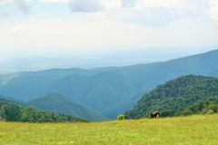 View from Parang mountains Stock Photography