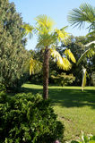 View of the park Arboretum city of Sochi Stock Photography