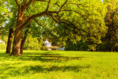 View of park in Pushkin in summer day Stock Photos