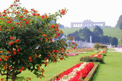 The view on the park with red and white flowers in the sunny day. Stock Photography