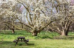 View from park in the spring Royalty Free Stock Images
