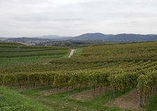 Lahr  vineyards. View past the vineyards towards the town of Friesenheim , Ortenau region in Baden Germany Stock Images