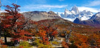 Trees with autumn colors and Mount Fitz Roy, Patagonia, Argentina stock photo