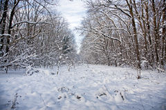 Winter forest path Royalty Free Stock Photos