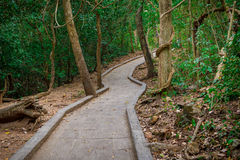 View of a pathway to the forest. In thailand Royalty Free Stock Photography