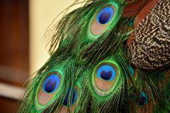 Peacock feathers forming a face stock images