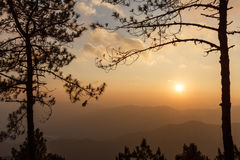 View at peak. View of sunset and pine tree at peak of Doi Pha Hom Pok, Thailand Royalty Free Stock Photography