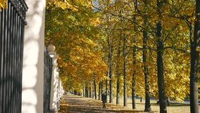 Park Alley With Colorful Bright Fall Leaves On The Trees In Golden Autumn Day. View of pedestrian alley in the city park in golden autumn day with bright stock footage