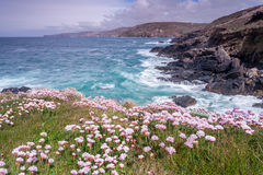 View from Pendeen lighthouse in cornwall england uk. Pendeen lighthouse stunning scenery in this famous artisitic location in cornwall england uk Royalty Free Stock Images