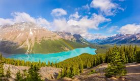 View at the Peyto lake from Bow Summit in Banff National Park - Canadian Rocky Mountains. View at the Peyto lake from Bow Summit in Canadian Rocky Mountains stock images