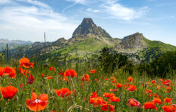 View of Pic du Midi d`Ossau in French Pyrenees, with field of p royalty free stock photo