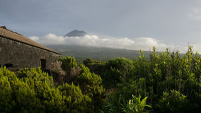 View of Pico through the vineyards in Azores Stock Photo