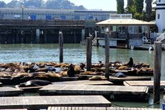 A view of PIER 39 San Francisco USA Royalty Free Stock Images