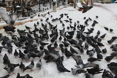 View of pigeons with snow in front of Eyup Sultan Mosque. Stock Photos