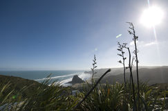 View of Piha Beach. Looking down over New Zealand's rugged surf beach at Piha royalty free stock image