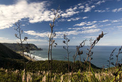 View of Piha beach through flax bushes, west coast, North Island, New Zealand Royalty Free Stock Image